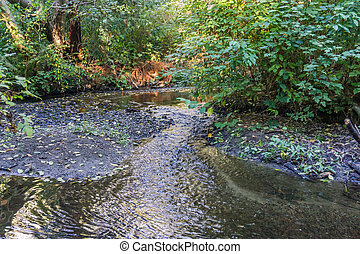 Stream And Bushes