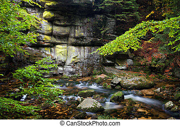 Stream and Cliff in Mountain Forest