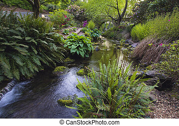 Stream Flowing Under the Wooden Bridge Arches with Ferns Hostas and Bog Plants at Crystal Springs Rhododendron Garden