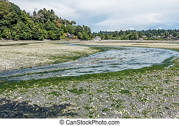 Stream At Low Tide 2