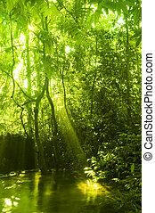 stream., bosque verde