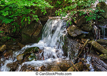 stream cascade flowing in forest
