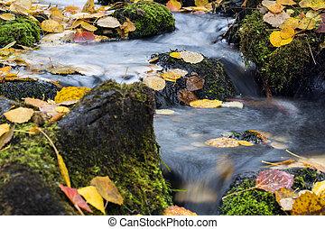 Stream flow between mossy rocks to lake - Small stream flow ...