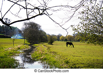 Stream flowing through a field in the Chilterns, England