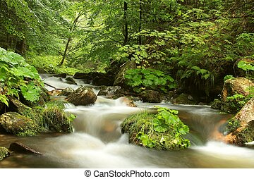 Stream flowing through the forest
