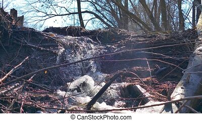 stream forest river dry trees waterfall motion video -...