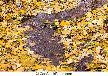stream in a forest autumn
