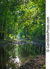 Stream in a forest II