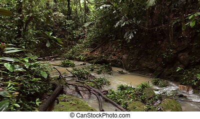 Stream in Amazon Rainforest
