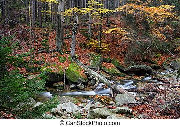Stream in Autumn Mountain Forest