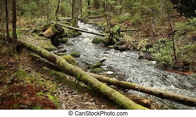stream in boreal forest dolly shot, with sound