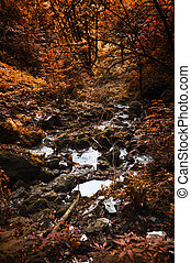 Stream in forest at autumn, beautiful forest area with autumn colors