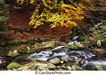 Stream in Mountain Forest