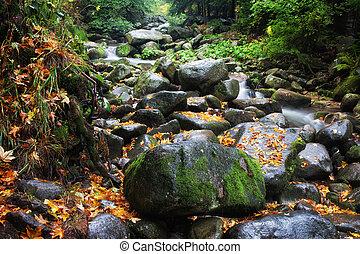 Stream in Mountain Forest Wilderness
