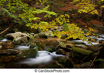 Stream in October Mountain Forest