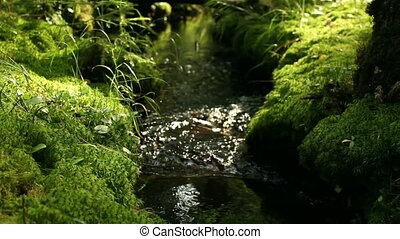 Stream in shady rainy forest - Stream in shady thickets of...