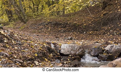 Stream in the autumn forest