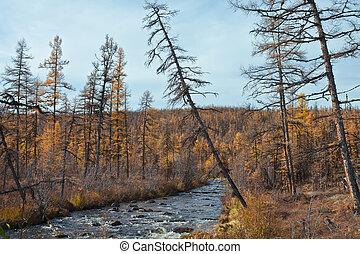 Stream in the autumn the Siberian taiga