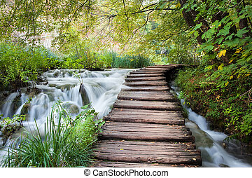 Stream in the Forest - Wooden path along the stream in...