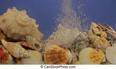 Stream of bubbles in blue water and sea shells. Beauty in...