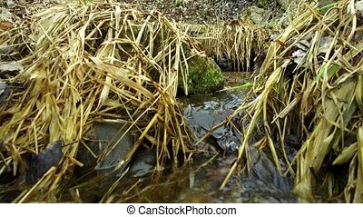stream of spring water in grass - stream of pure spring...