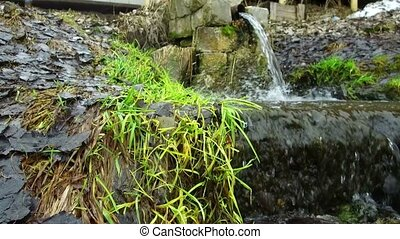 stream of spring water in  grass