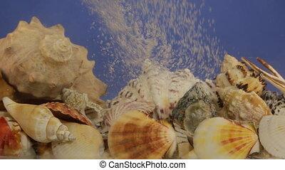Stream of white bubbles in blue water on seashells. Beauty...
