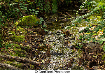 stream on the sacred shore, world heritage, ourense, galicia, spain