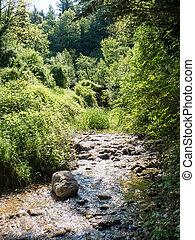 Stream running through the woods.