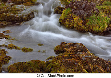 Stream with floating water.