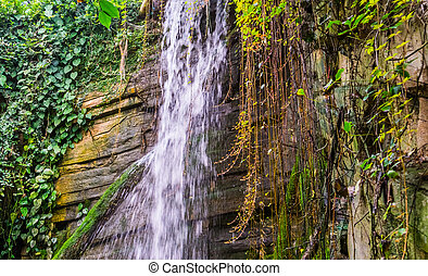 streaming water of a cliff with vine plants, tropical nature scenery background