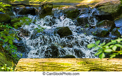 streaming water over rocks in closeup, beautiful garden architecture, nature background of a tiny waterfall
