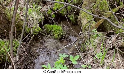 Streams of a mountain stream, river among the moss-covered trees