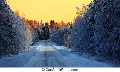 Street and illuminated treetops in an orange sunset in northern Sweden