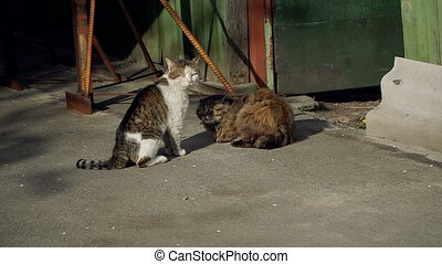 Street cat. A cat who lives on the street