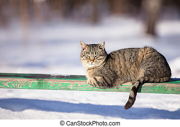 Street cat in winter on a bench basking in the sun