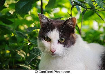 Street cat sitting in the grass