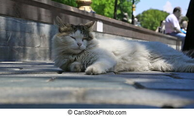 Street cat squinting in the sun - Urban street with street...