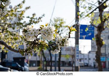 Street corner in the morning of flo