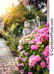 Street decoration with pink hortensias