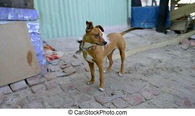 Street dog standing on walkway 4k