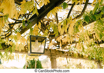 Street lamp hanging on an arch among yellow leaves.