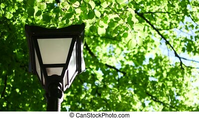 Street lamp on a background of green leaves and trees in the park