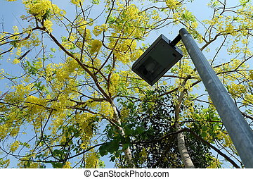 Street Lamp with Golden Shower Flower Tree Background.