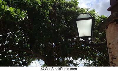 Street lamps in park - Street lamps in tropical park