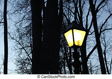 Street light and silhouettes of trees