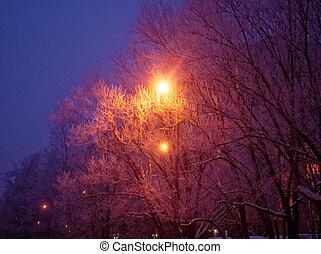 street light at night in winter