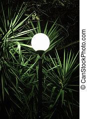 street light plant leaves