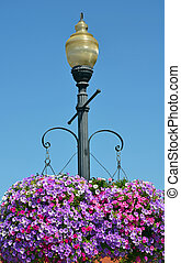 Street light with hanging petunia flower baskets