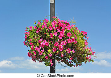Street light with petunia flowerbed